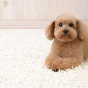 Як вдома почистити килим: прості та ефективні засоби