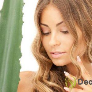 Маски для волосся з соком алое і їх ефективність