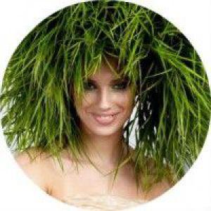 Рецепти засобів на основі цілющих трав для догляду і лікування волосся